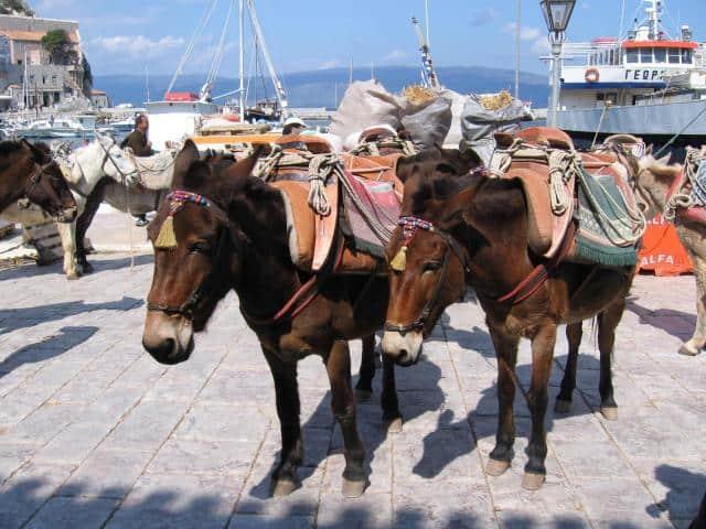 Donkey rides in Hydra island. Rent a donkey...